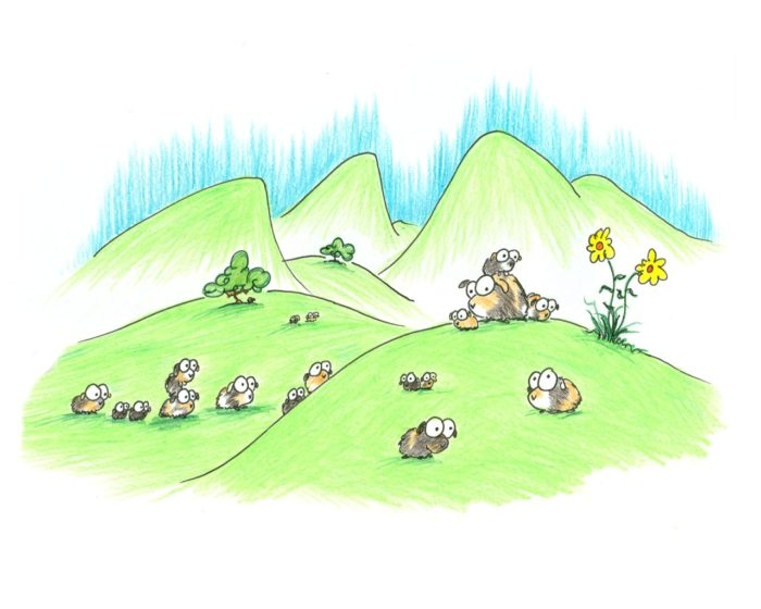 a wild herd of guinea pigs in some rolling hills